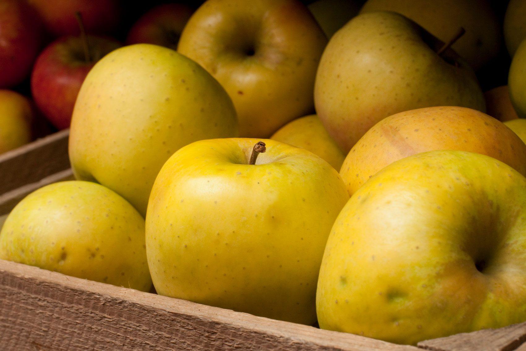 Odmiana jabłek